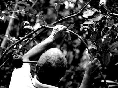 Descolonizar o Brasil: por uma epistemologia da ciência (en)cantada da Jurema