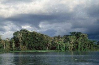 A profecia da Amazônia: o Bem-viver ecocósmico